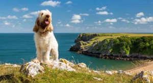 FBM Holidays pet friendly cottages