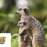 Longleat Safari Park Save 20% Off Ticket Price