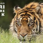 West Midland Safari Park Free Ticket Offer